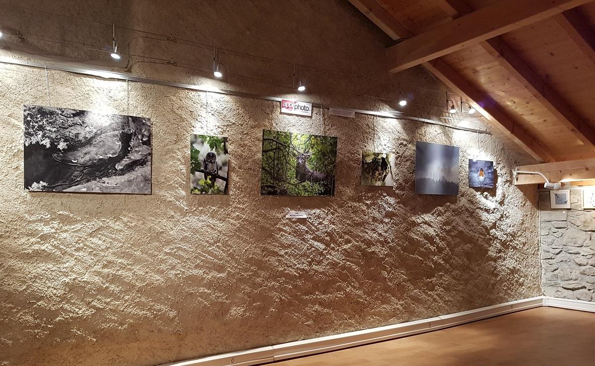 merci-douvaine-expo-photos.jpg